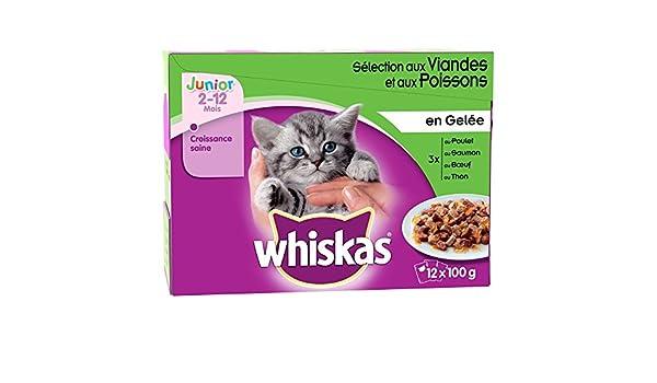 Whiskas - Comida en jalea Junior en los para gato - 12 x 100g: Amazon.es: Productos para mascotas