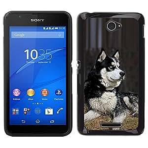 Caucho caso de Shell duro de la cubierta de accesorios de protección BY RAYDREAMMM - Sony Xperia E4 - Husky siberiano perro de trineo polar