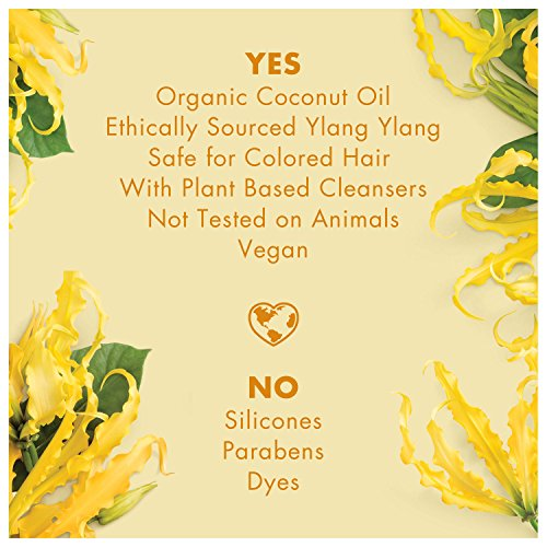 Love And Shampoo and Conditioner, Oil & Ylang 13.5
