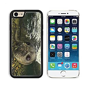 Fur Seal Underwater Swimming Face Stones Apple iPhone 6 TPU Snap Cover Premium Aluminium Design Back Plate Case Customized Made to Order Support Ready Liil iPhone_6 Professional Case Touch Accessories Graphic Covers Designed Model Sleeve HD Template Wallpaper Photo Jacket Wifi Luxury Protector Wireless Cellphone Cell Phone