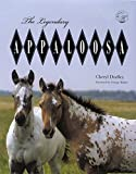 Legendary Appaloosa