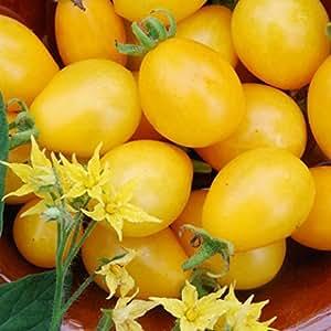 Ildi Tomato 15 Seeds -Yummy Yellow Grape Tomato!- EARLY