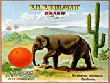 ELEPHANT PLAYING WITH A ORANGE CRATE LABEL CALIFORNIA FRUIT COMPANY SMALL VINTAGE POSTER CANVAS REPRO