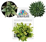 Altman Plants Succulents Desk Buddy Collection 3.5'' 3 Pack