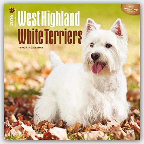 West Highland White Terriers 2016 - Westies - 18-Monatskalender mit freier DogDays-App: Original BrownTrout-Kalender [Mehrsprachig] [Kalender] (Wall-Kalender)