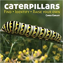 Caterpillars Find Identify Raise Your Own Amazoncouk