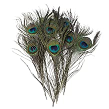 Salesland Pack of 30pc Natural Peacock Feathers 10-12''