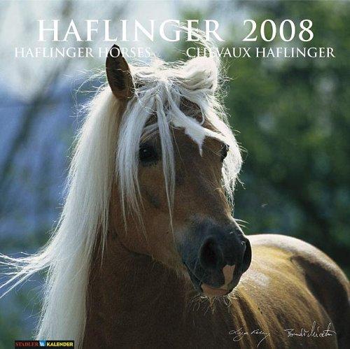 Haflinger 2008