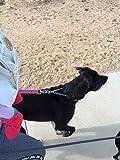 REAL PET Dog Prong Training Collar, Adjustable