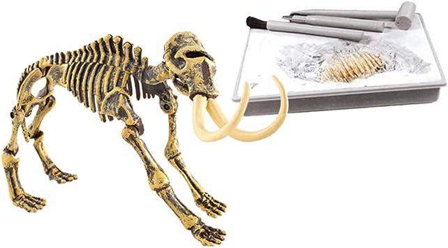 Magideal Juguete De Fosil De Dinosaurios Mamut De Simulacion Con Herramientas De Excavacion Juego Para Aprendizaje De Arqueologia De Ninos Mamut Amazon Es Juguetes Y Juegos Mas de 100 reproducciones de dinosaurios , animatronic, mamut. magideal juguete de fosil de