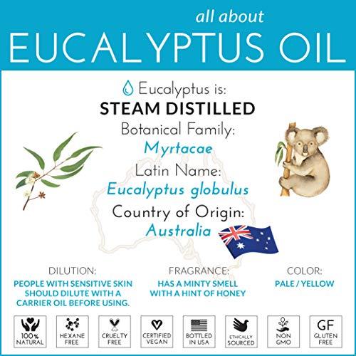 ArtNaturals 100% Pure Eucalyptus Essential Oil - (4.0 Fl Oz / 118ml) - Therapeutic Grade Natural Oils