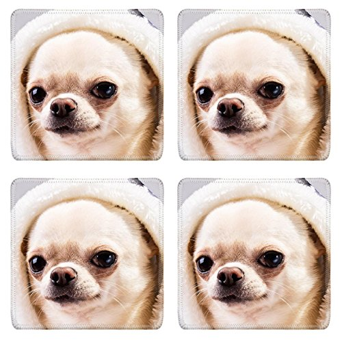 [MSD Square Coasters Image ID 24455689 face of chihuahua dog in hood close up portrait] (Animals Dressed Up In Halloween Costumes)
