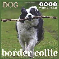 border collie DOG: 2021 Wall & Office Calendar, 12 Month Calendar