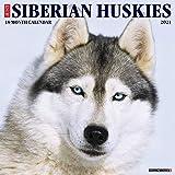 Just Siberian Huskies 2021 Wall Calendar (Dog Breed Calendar)