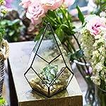 NCYP-Modern-Artistic-Clear-Glass-Geometric-Terrarium-Four-Surfaces-Diamond-Succulent-Fern-Moss-Air-Plant-Flower-Pot-Office-Desktop-Box-Window-Display-Planter-for-Wedding-Decoration