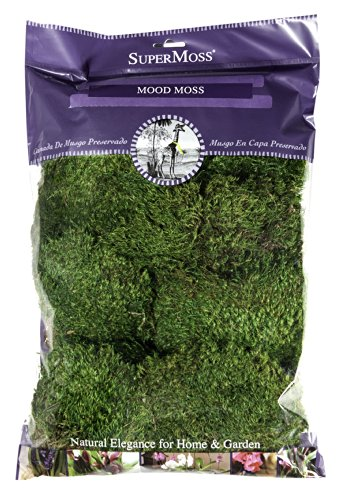 Super Moss 21539 Preserved Mood Moss, Natural Green, 8-Ounce (Greens Preserved)