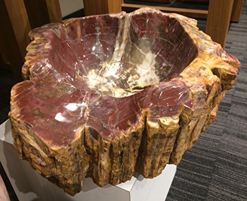 (Astro Gallery Of Gems Petrified Wood Bowl from Morocco )