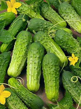 Cucumber Boston Pickling Great Heirloom Vegetable 300 Seeds Packed By Seed Kingdom