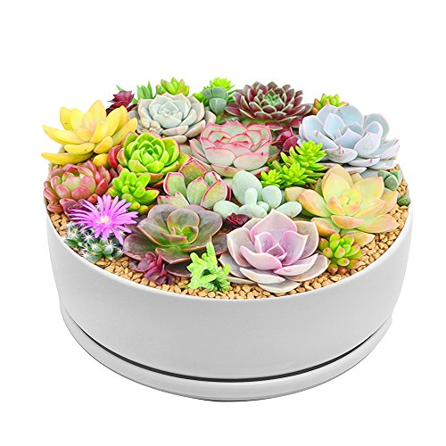 Large Planter Pots Indoor,Y&M(TM) 8.0 inch Modern Garden White Ceramic Round Bowl with Saucer for Succulent Planter Cactus