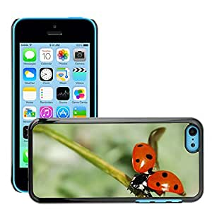 Hot Style Cell Phone PC Hard Case Cover // M00116147 Ladybug Insect Nemrut Dagi // Apple iPhone 5C