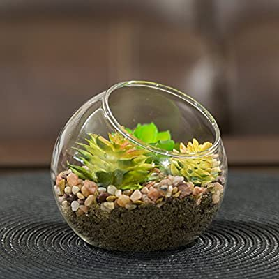 NeutralPure ECO Tabletop Glass Plant Terrarium (3 Pcs): Garden & Outdoor
