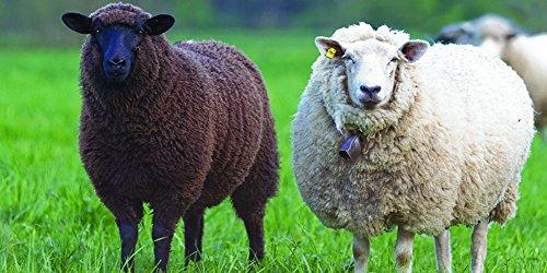 - Nature's Seed 0.5 Acre Florida Tropics Sheep Pasture Blend