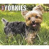 2018 Just Yorkies Daily Desktop Box Calendar Dogs {jg} Great Holiday Gift Ideas - for mom, dad, sister, brother, grandparents, gay, lgbtq, grandchildren, grandma.