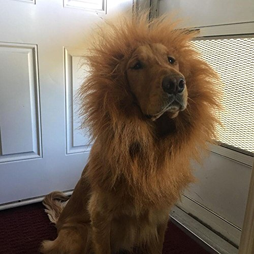 Homemade Dog Lion Costumes (Lion Mane for Dog | Halloween Dog Lion Costume/ Wig/ Hat/ Hair by Furpaw with Extra Free Gift [Lion Tail])