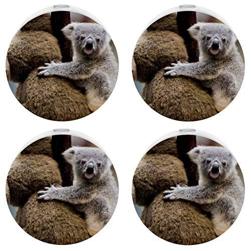 Small Night Light with Australian Animal Koala Night Light Plug in Wall with Dusk-to-Dawn Sensor Pack of 4