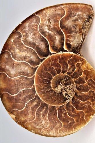 - Blank Journal - Fibonacci Ammonite Shell