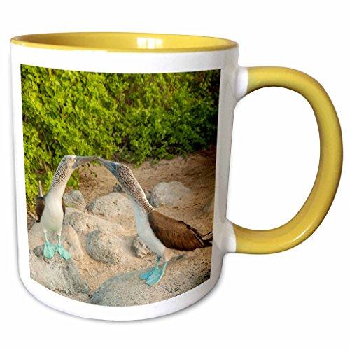 3dRose Danita Delimont - Birds - Ecuador, Galapagos National Park, San Cristobal. Blue footed booby - 15oz Two-Tone Yellow Mug (mug_228793_13)