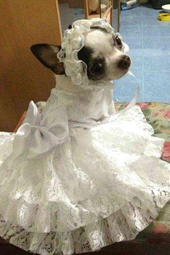 Dog Wedding Dress Puppy Bridal Gown | Dog Wedding Dress