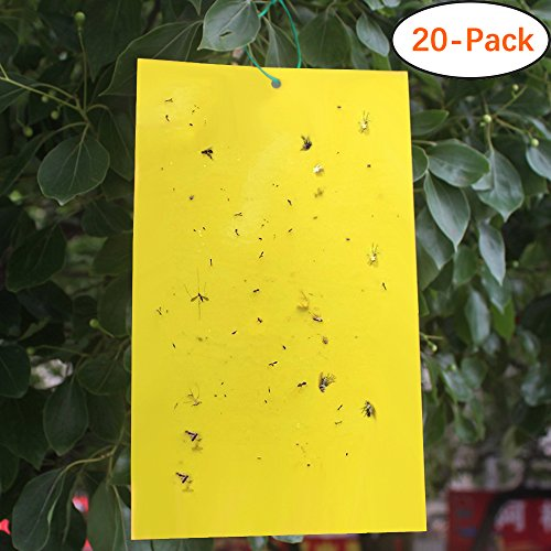 Fly Sticky (Trapro 20-Pack Dual-Sided Yellow Sticky Traps for Flying Plant Insect Like Fungus Gnats, Aphids, Whiteflies, Leafminers - (6x8 Inches, Twist Ties Included))