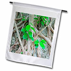 Danita Delimont - Florida - Strangler fig, Windley Key Fossil Reef, Florida - US10 MPR0420 - Maresa Pryor - 12 x 18 inch Garden Flag (fl_89240_1)
