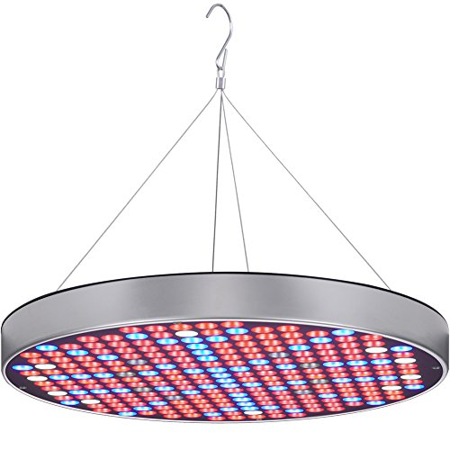 Blue And Red Led Lights For Growing in US - 2