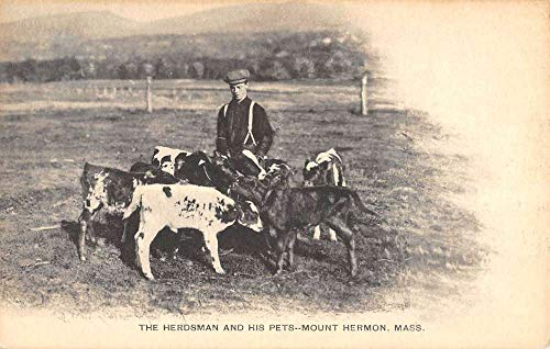 Mount Hermon Massachusetts Herdsman And Pets Antique Postcard K108002 ()