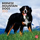 (12x12) Bernese Mountain Dogs - 2013 Wall Calendar