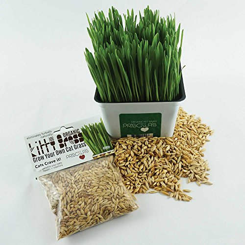 - Priscillas Kitty Cat Pet Grass Seed Pack (Barley, Oats, Wheat and Rye) Over 3 OZ.