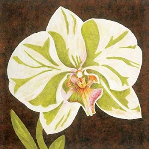 Posterazzi Surabaya Orchid Petites A by Judy Shelby Poster Print by by (12 x 12)