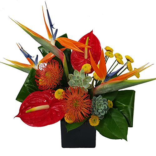Ashland Addison- ''The Tropics''- Fresh Hand Delivered Bouquet- Chicago Area by Ashland Addison Florist