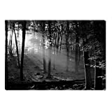 Startonight Glass Wall Art Acrylic Decor Black and White Morning in the Forest, 5 Stars Gift 23.62 X 35.43 Inch the Ultimate Wall Art!
