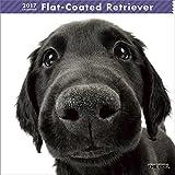 THE DOG Wall Calendar 2017 Flat-Coated Retriever