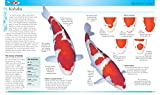 Koi: A Complete Guide to their Care and Color
