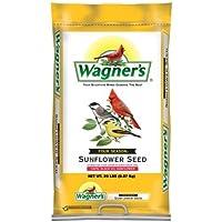 Wagner's Oil Sunflower