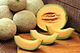 200 HALE'S BEST JUMBO CANTALOUPE Orange Muskmelon Cucumis Melo Melon Fruit Seeds