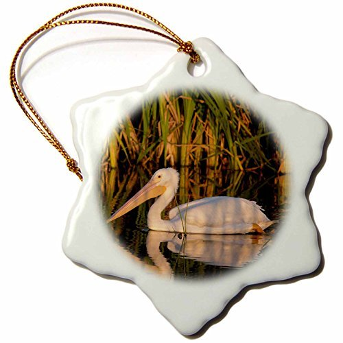 (Ornaments to Paint Danita Delimont - Birds - White pelican, Viera Wetlands Florida, USA)