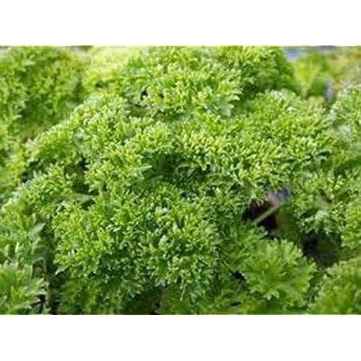 Tiyuki Herb Seed Garden Collection, Heirloom, Non GMO, Organic Seeds, 6 Top Seeds : Garden & Outdoor