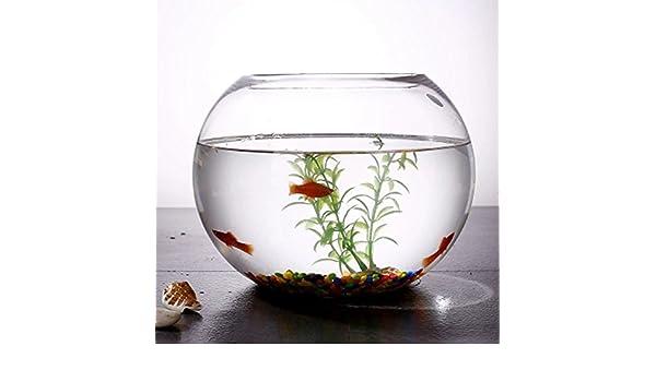 JIANGU, pecera, vaso creativo redondo pecera, salón pequeño cuenco de pez dorado, escritorio de oficina mini pecera: Amazon.es: Productos para mascotas