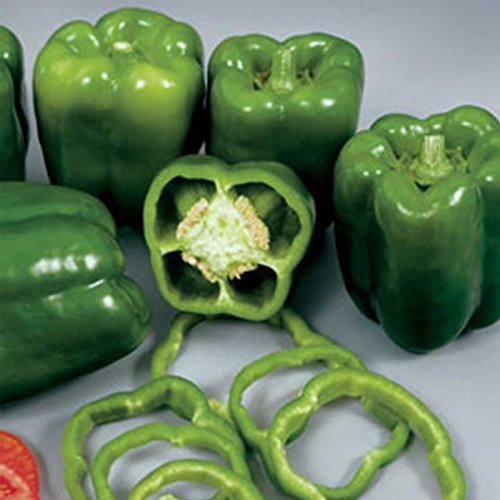 Colossal Hybrid Sweet Pepper Garden Seeds (Treated) - 1000 Seeds - Non-GMO, Green Bell Pepper Vegetable Gardening Seeds by Mountain Valley Seed Company (Image #2)