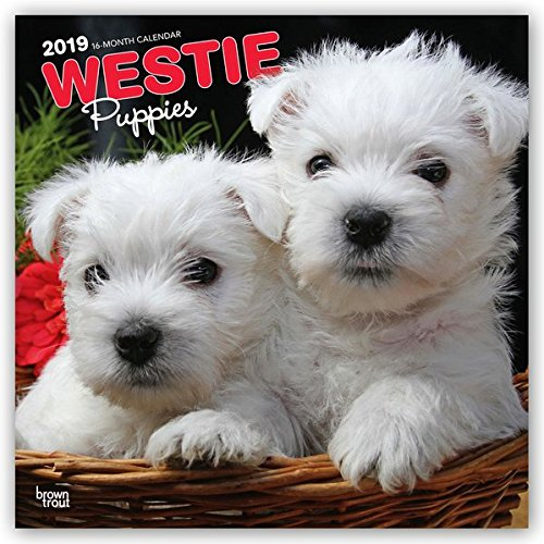 West Highland White Terrier Puppies 2019 12 x 12 Inch Monthly Square Wall Calendar, Animals Dog Breeds Terrier Puppies